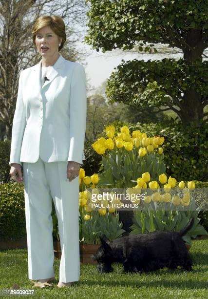 US First Lady Laura Bush stands with her dog Barney 16 April 2004 near arrangements of yellow tulips in the East Garden of the White House in...