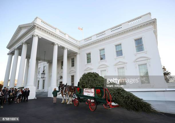First lady Melania Trump and her son Barron welcomed a 195foot balsam Fir that will serve as the official White House Christmas Tree at the White...