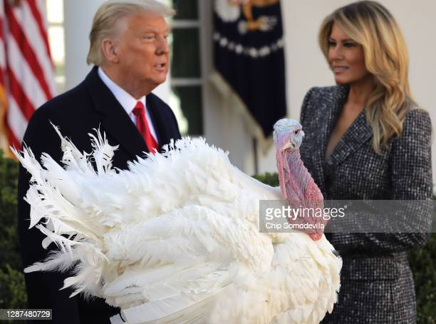 """First lady Melania Trump looks on as U.S. President Donald Trump gives the National Thanksgiving Turkey """"Corn"""" a presidential pardon during the..."""