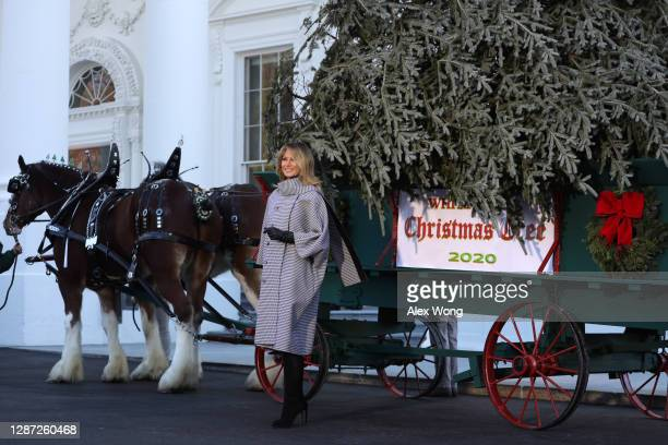 First lady Melania Trump receives the 2020 White House Christmas Tree November 23, 2020 at the White House in Washington, DC. The 18 foot tall Fraser...