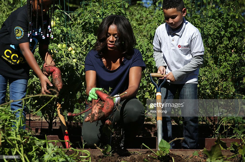First Lady Michelle Obama Hosts Students For The Fall Harvest Of The White House Kitchen Garden : Photo d'actualité