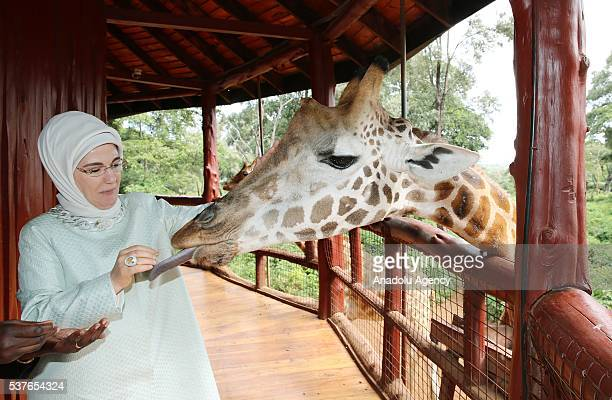 First Lady of Turkey Emine Erdogan feeds a giraffe during her visit at an animal protection center in Nairobi capital city of Kenya on June 2 2016