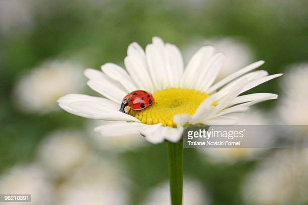 First ladybug of the Spring