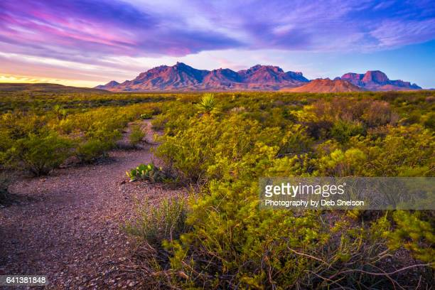first light on chisos mountains big bend national park - chisos mountains stock pictures, royalty-free photos & images