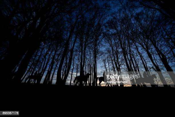 First lot make their way through the woods after working on the all weather gallop at Nicky Hendersons Seven Barrows stables on December 19 2017 in...