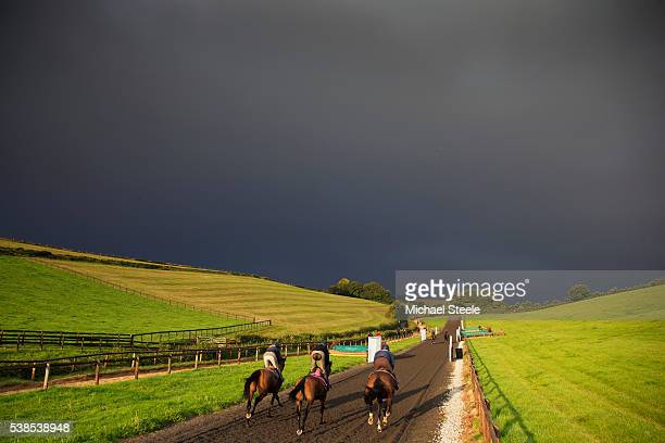 First lot workout on the polytrack gallop at Sandhill Racing Stables on September 30 2015 in Minehead England Sandhill Racing Stables set in 500...