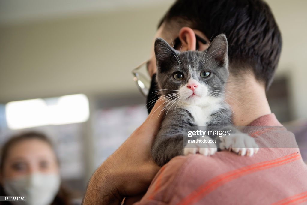 First meeting of newly adopted kitten and millenial couple. : Stock Photo