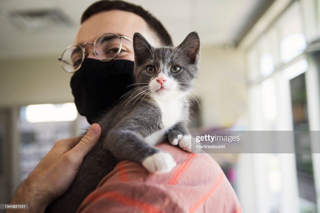 First meeting of newly adopted kitten and young man. : Stock Photo