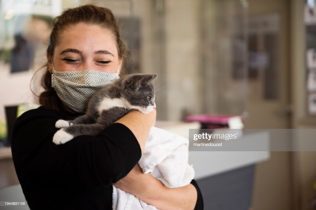 First meeting of newly adopted kitten and young woman. : Stock Photo