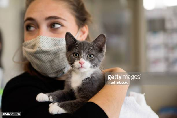 """first meeting of newly adopted kitten and young woman. - """"martine doucet"""" or martinedoucet stock pictures, royalty-free photos & images"""