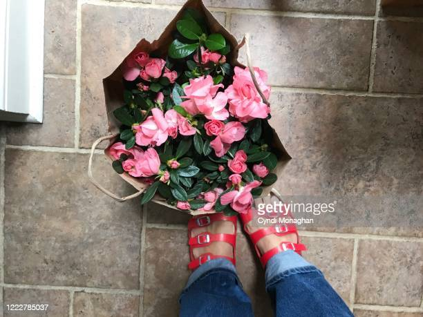 first person perspective looking down at a brown grocery bag with azalea blossoms - azalea stock pictures, royalty-free photos & images