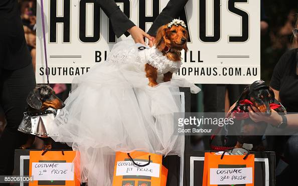 First Second And Third Placed Dachshunds Pose On The Dias