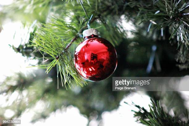 first signs of christmas - christmas beetle stock pictures, royalty-free photos & images