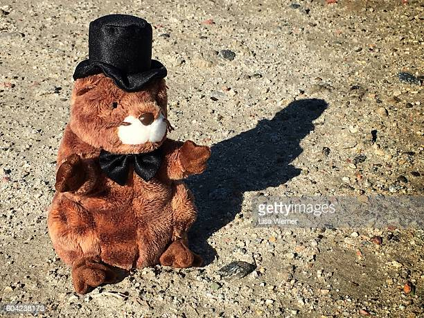 first signs of spring - punxsutawney phil stock pictures, royalty-free photos & images