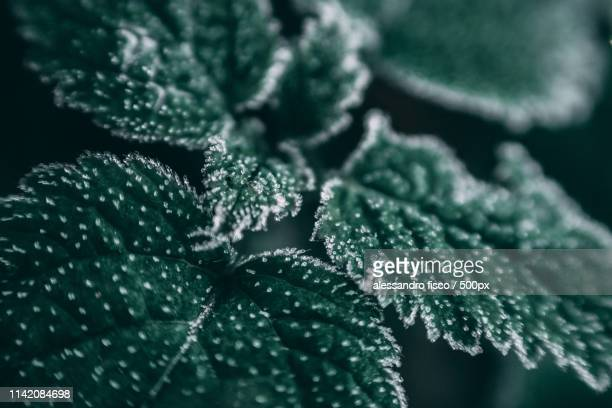 first snow - nature stock pictures, royalty-free photos & images