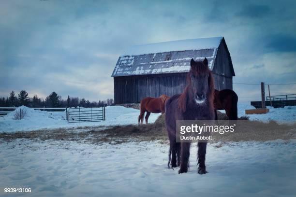 first snow - dustin abbott photos et images de collection