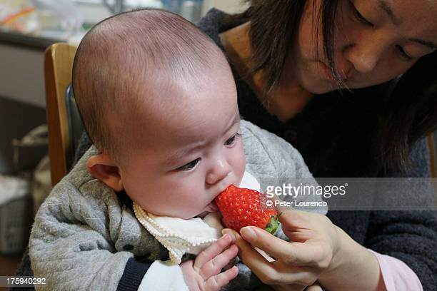 first solid food - peter lourenco stock pictures, royalty-free photos & images