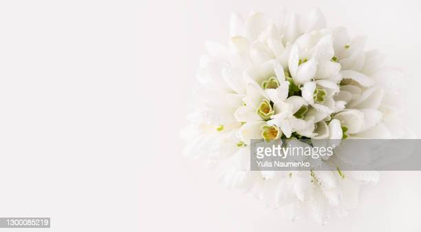 first spring flowers on white background - フラワーアレンジメント ストックフォトと画像