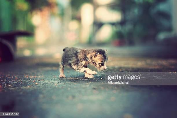 First Steps of Kitten