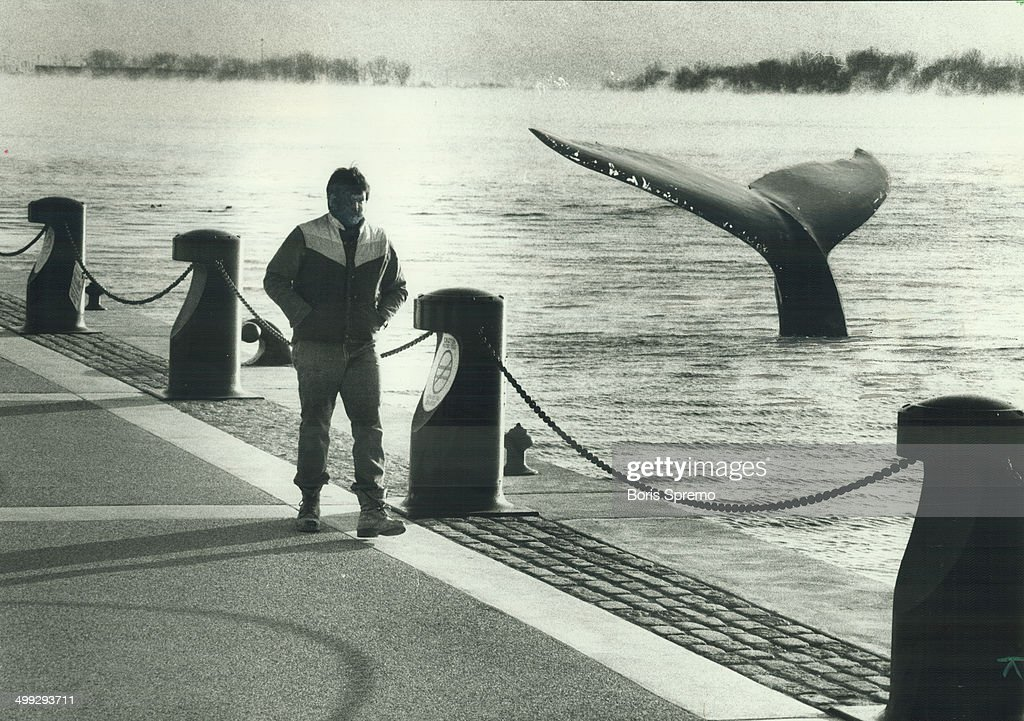 First; there was Humphrey; the wrong-way whale who lost his sense of direction in California and swa... : News Photo