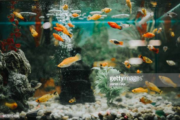 fischaquarium - aquarium haustierbedarf stock-fotos und bilder