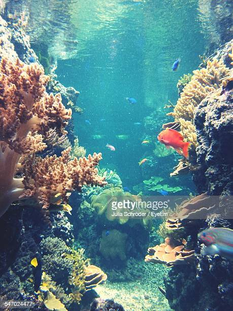 fish and coral reef - undersea stock pictures, royalty-free photos & images