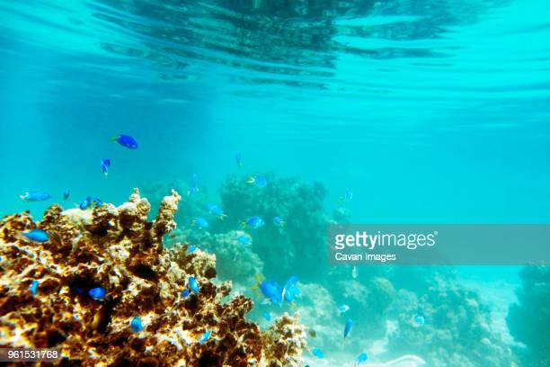 fish and coral underwater - seascape stock pictures, royalty-free photos & images