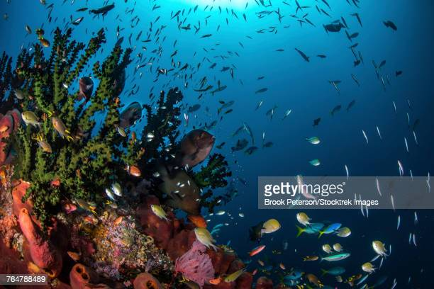 Fish and corals on a reef, Raja Ampat, Indonesia.