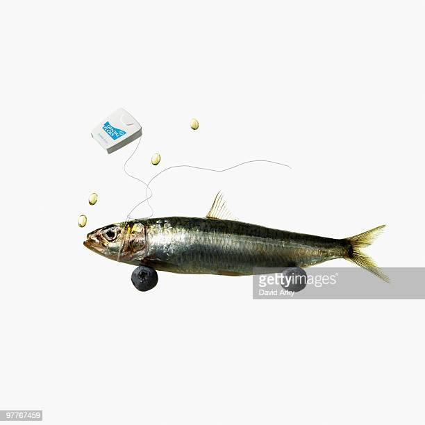 Fish and dental floss