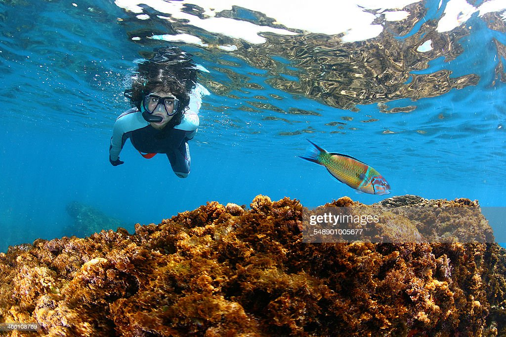 Fish and girl diver : Stock Photo