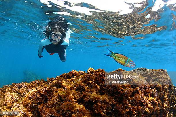 Fish and girl diver