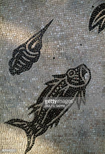 Fish and shellfish detail from a mosaic from the House of the Ocean Gods StRomainenGal Vienne RhoneAlpes France Roman civilisation 3rd century Vienne...