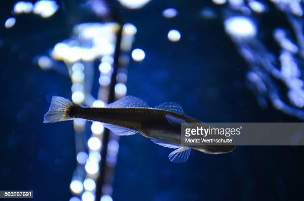 fish and waterplant - pianta acquatica foto e immagini stock