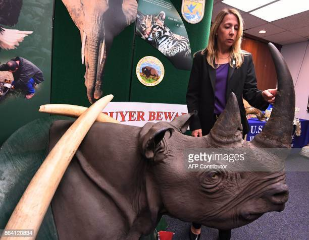 AUS Fish and Wildlife Agent Erin Dean stands beside a stuffed and smuggled rhinoceros during an Operation Jungle Book media event at the US Fish and...