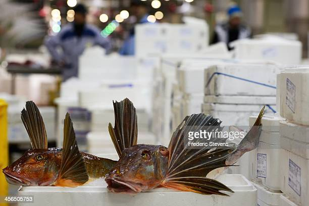 Fish are placed on display in the seafood department at the Rungis market on December 13 2013 in Rungis France Rungis is the world's largest...