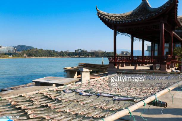 Fish are seen laid out to dry in the sun on the shore of Donqian Lake on December 22 2017 in Ningbo Zhejiang Province of China