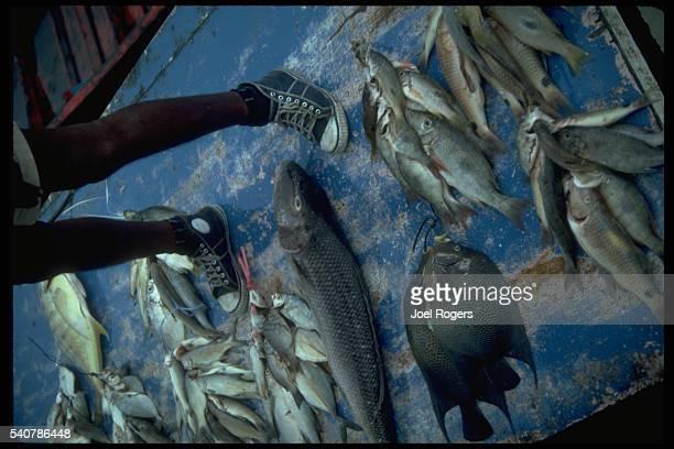 Fish at Floating Fish Market
