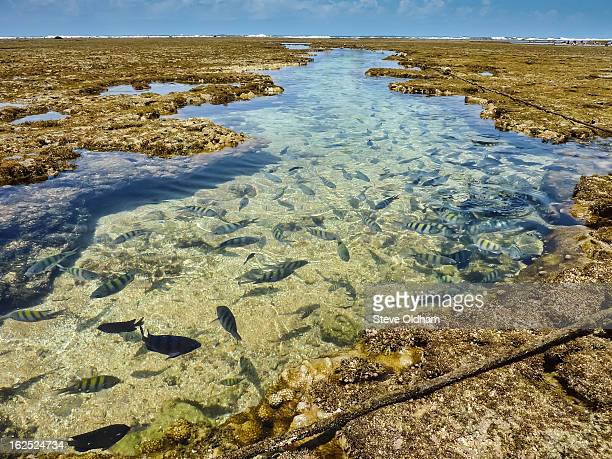 fish at low tide - porto galinhas stock photos and pictures