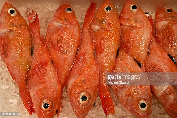 fish at tsukiji fish market - michael siward stock pictures, royalty-free photos & images