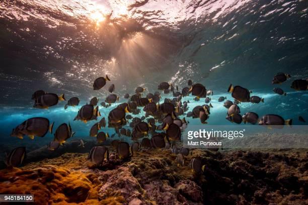 Fish beneath the breaking waves