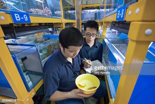 Fish breeding in marine biology laboratory