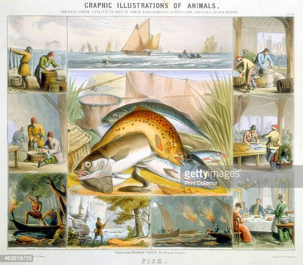 Fish c1850 Around the central image are vignettes of boats fishing for mackerel and for anchovies with flares of spearing fish and catching with rod...
