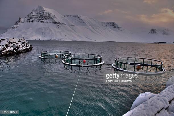 fish cages at fjord of ísafjarðardjúp at bolungarvík in the westfjords of iceland - westfjords iceland stock photos and pictures