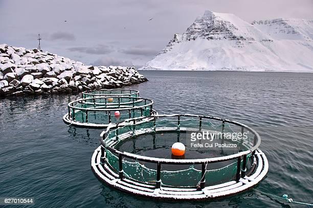 Fish cages at fjord of Ísafjarðardjúp at Bolungarvík in the westfjords of Iceland
