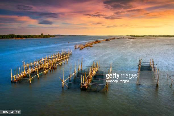 fish cages at the estuary laem sing - chanthaburi sea stock pictures, royalty-free photos & images