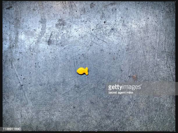 fish cookie on floor - black border stock pictures, royalty-free photos & images