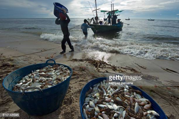 Fish dead on the beach because freshwater flow to the sea at Bangsean, Chonburi province, Thailand.