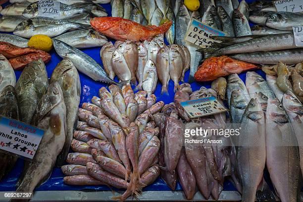 Fish displayed at fish market