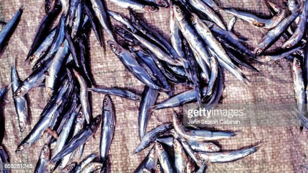 Fish Drying in the Mentawai Islands