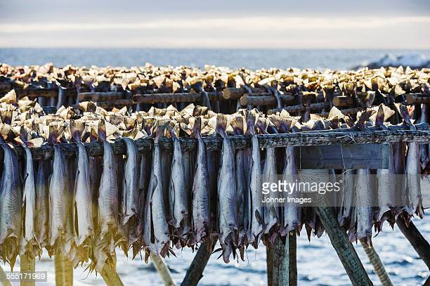 Fish drying on rack at sea